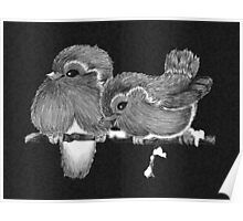 Feathered Friends with Charcoal Poster