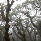 Kupwuriso Fog - Pohnpei, Micronesia by Alex Zuccarelli