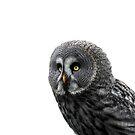 Great Grey Owl One by Barnbk02