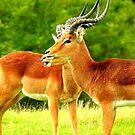Impalas in the Rain by Barnbk02