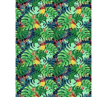 Beautiful pattern leaves monstera and frogs  Photographic Print