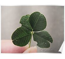 Four-Leaf Clover Macro Poster
