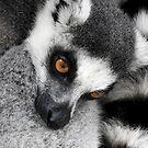 Depressed Lemur by Barnbk02