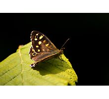 Butterfly On Leaf Photographic Print
