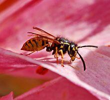 Wasp - Yellow Jacket by AnnDixon