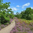The Heather Path by relayer51