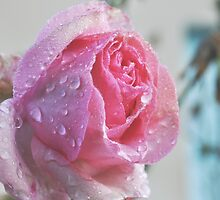 Raindrops on Roses by Hollie Burton