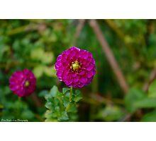 Bright Pink Flower  Photographic Print