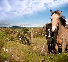 a pair of beautiful Irish horses and ancient round tower by morrbyte