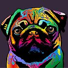 Pug Dog by Michael Tompsett