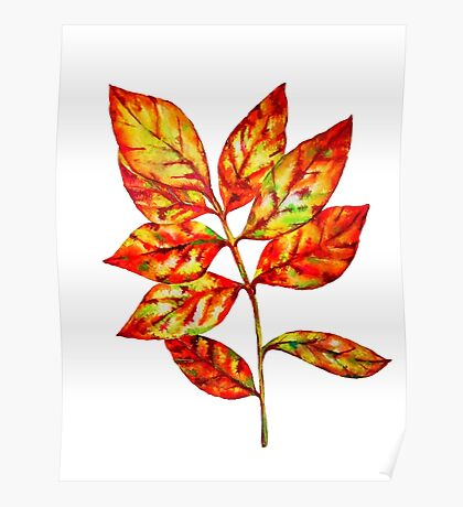 watercolor colourful autumn leaf Poster