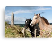 beautiful pair of Irish horses Canvas Print