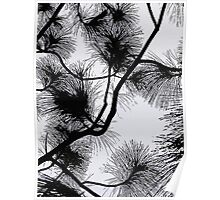 Desert flora, abstract pattern, floral design, black and white Poster