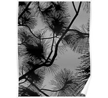 Desert flora, abstract pattern, floral design, black and gray Poster