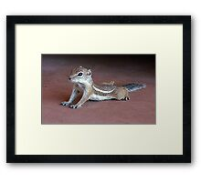 """Yoga Chipmunk"" Framed Print"