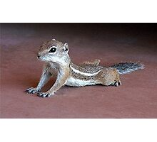 """Yoga Chipmunk"" Photographic Print"