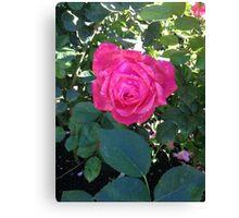 Camelot Rose Canvas Print