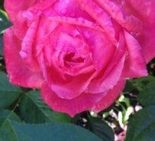 Camelot Rose Sticker