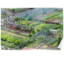 vegetable garden in the hills Poster