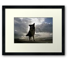Indy in the Light Framed Print