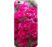 rose in the garden iPhone Case/Skin