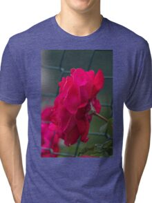 rose in the garden Tri-blend T-Shirt