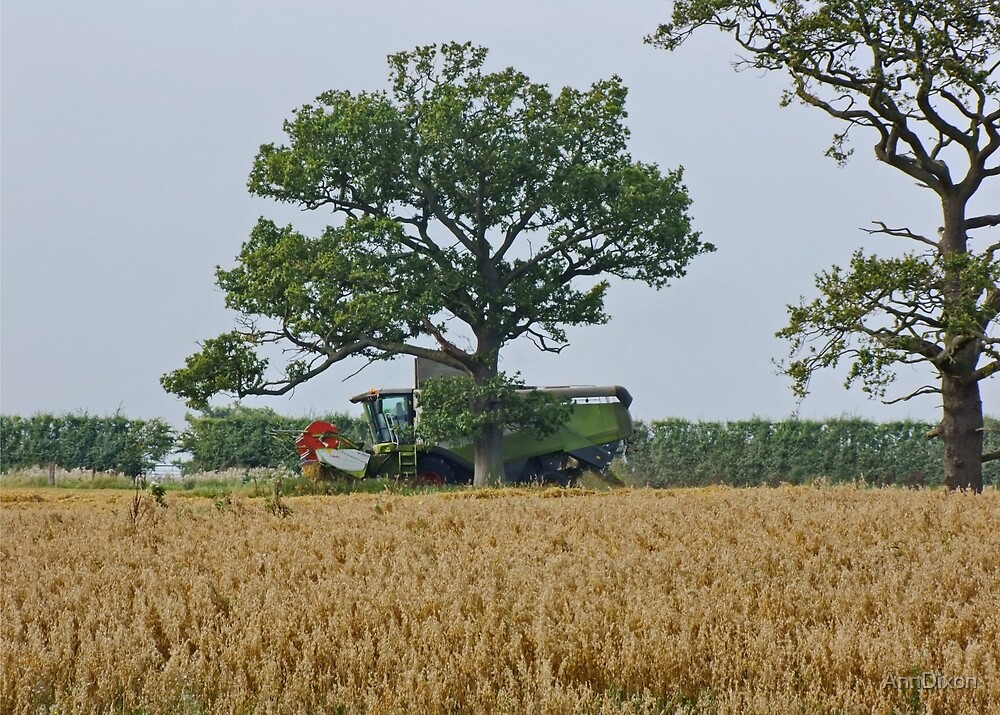 Harvest Time by AnnDixon