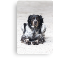 dog in the street Canvas Print