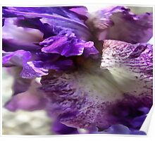 Purple, Violet and Mauve Iris Abstract Poster