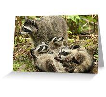 Raccoon Kits Fooling Around Greeting Card
