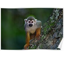 Scented Monkey Poster