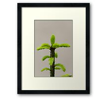 pine in the forest Framed Print