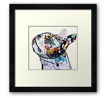 boston bulldog  Framed Print