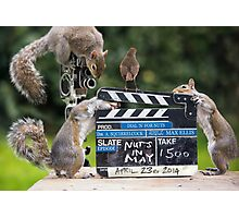 Squirrels go Nuts in may Photographic Print