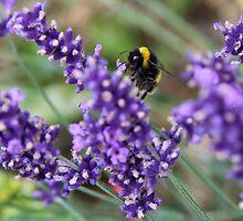 Summer Bumble Bee 1 by Vanessa  Warren