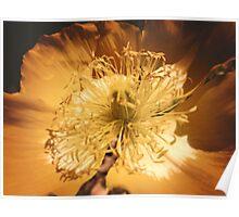 Yellow Flower Sunny Daze Poster