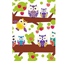 Funny owls on a branch Photographic Print