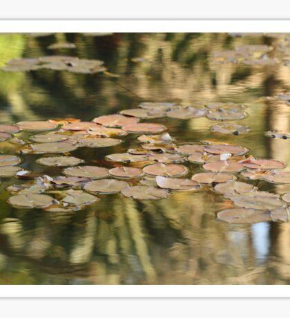 Lilypads, Araluen Botanic Gardens, Araluen, WA Australia Sticker
