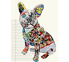 french bulldog modern  Photographic Print