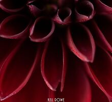 The red dahlia (version 2) by Kell Rowe