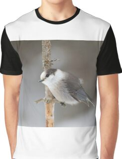 Gray Jay - Algonquin Park Graphic T-Shirt