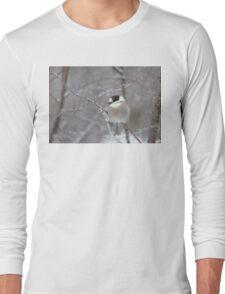 Gray Jay in Algonquin Park T-Shirt