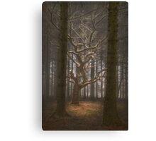 Singular Tree Canvas Print