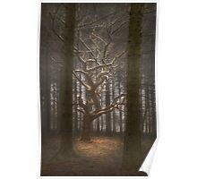 Singular Tree Poster