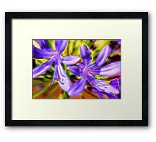 African Lily Flower Framed Print