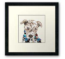 a pit bull day  Framed Print