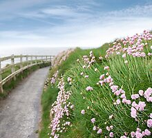 pink wild flowers along a cliff walk path by morrbyte