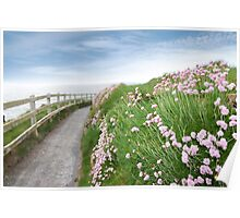 pink wild flowers along a cliff walk path Poster
