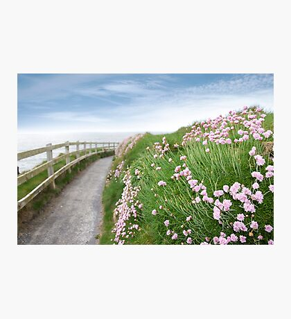 pink wild flowers along a cliff walk path Photographic Print