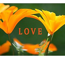 LOVE (with Golden Poppies) Photographic Print